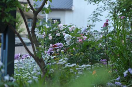 風景2014518-6a