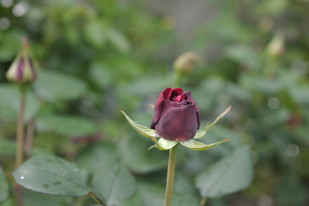 blachberrynip2014429-1.jpg