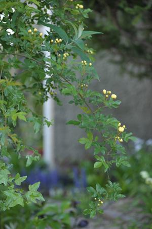 kimokkou2014224-2.jpg