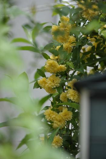 kimokkou2014429-10.jpg
