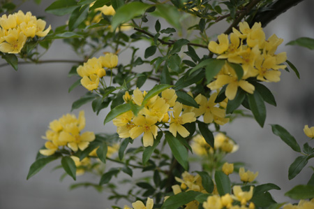 kimokkou2014429-3.jpg