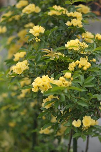 kimokkou2014429-4.jpg