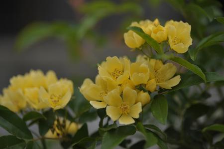 kimokkou2014429-5.jpg