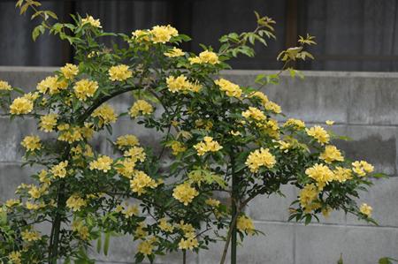 kimokkou2014430-1.jpg