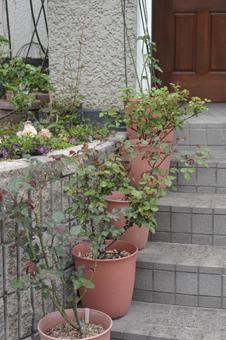 rose2014405-4.jpg