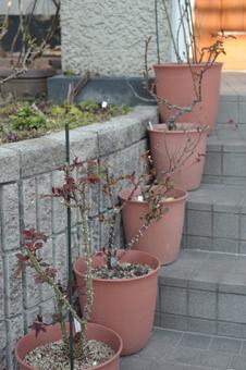 roses2014317-2.jpg