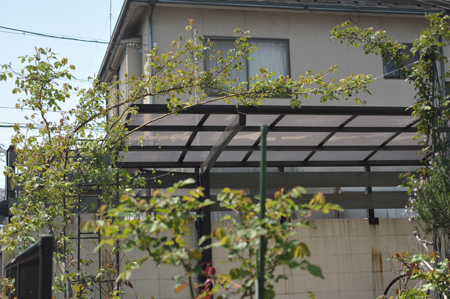 shirohana2014410-1.jpg
