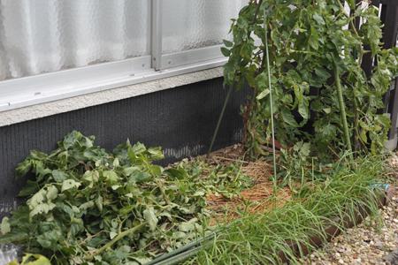 tomato2014807-1.jpg