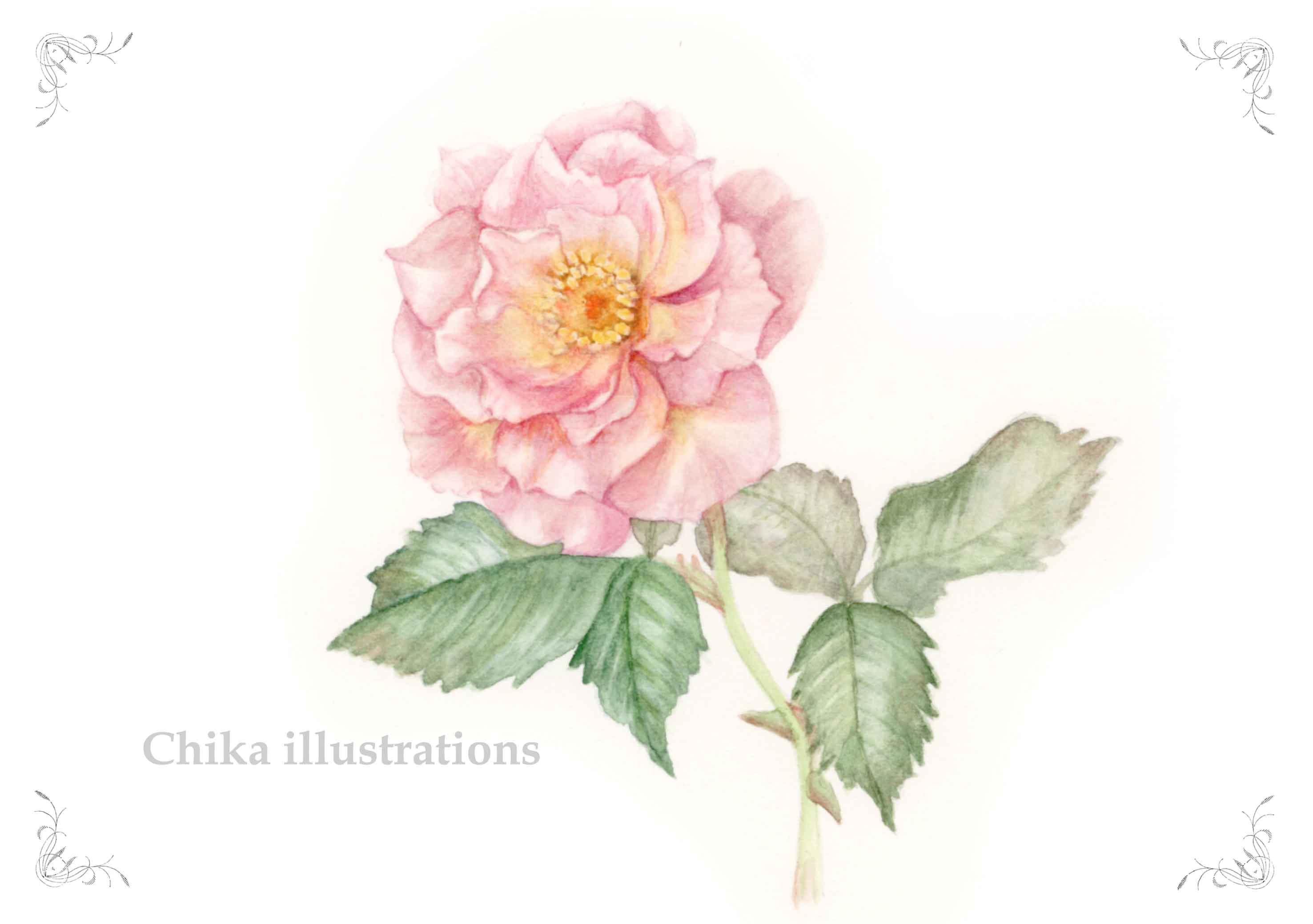 rose ブログ用