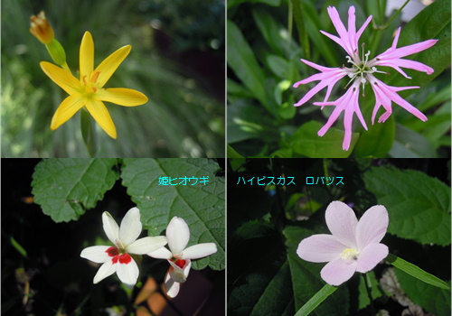 小さな花たち