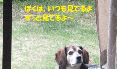 032_20140520205426dc7.jpg