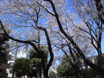 お花見6~よい天気