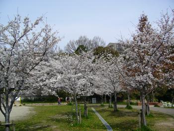 芝生公園11