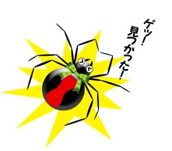 セアカゴケグモ見つかった