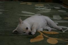 yuri4.jpg