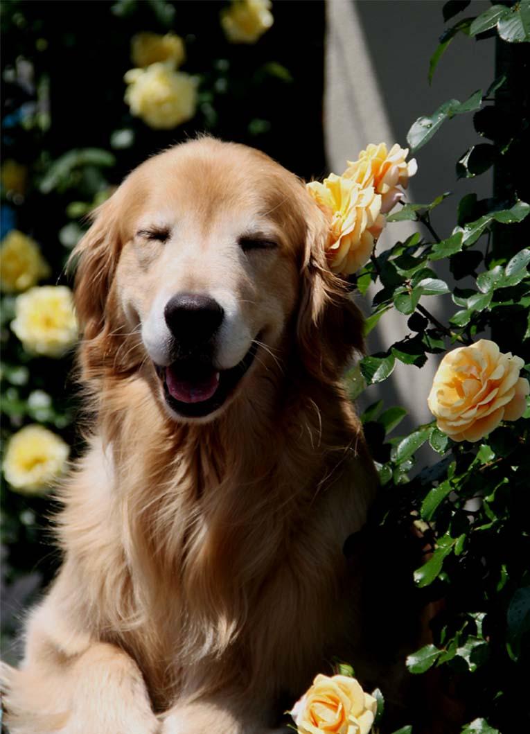 犬とバラの日々(19) 0522