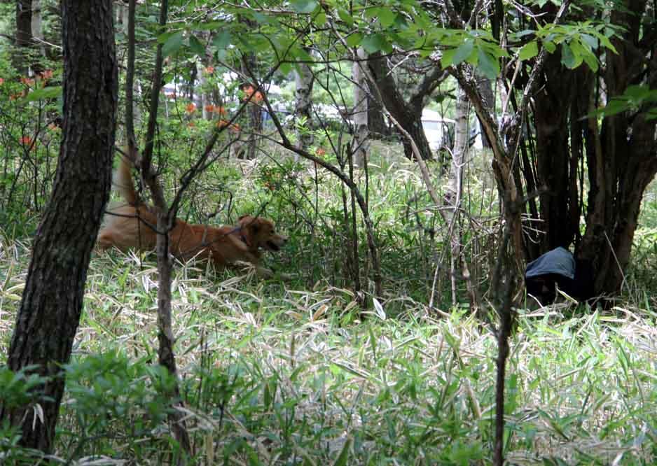 レンゲツツジの咲く林間で(4)