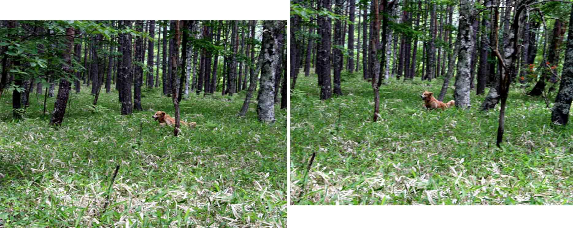 レンゲツツジの咲く林間で(3)