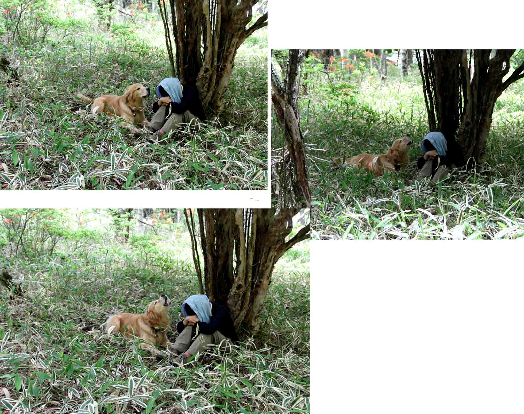 レンゲツツジの咲く林間で(5)