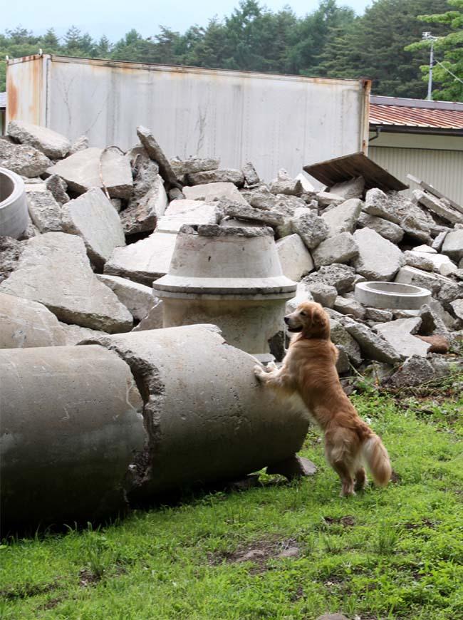 瓦礫訓練施設の中で(1)