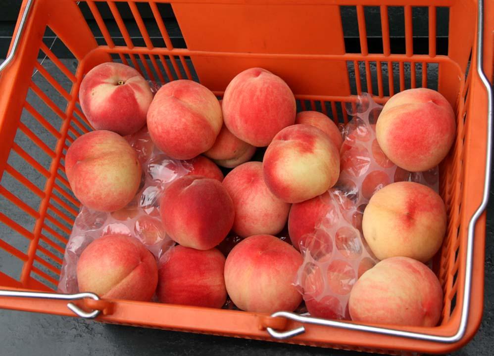 桃の収穫(3)