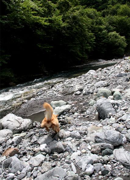 河原で捜索 0719(6)
