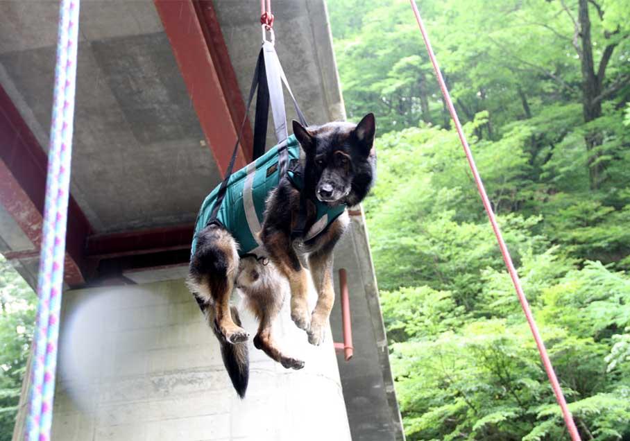 犬の吊り下げ(3)