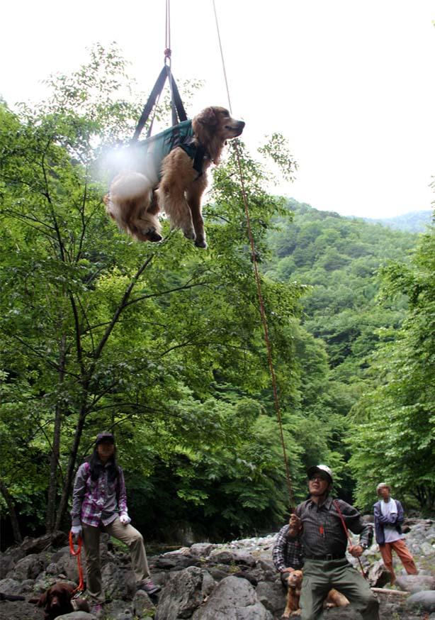 犬の吊り下げ(10)