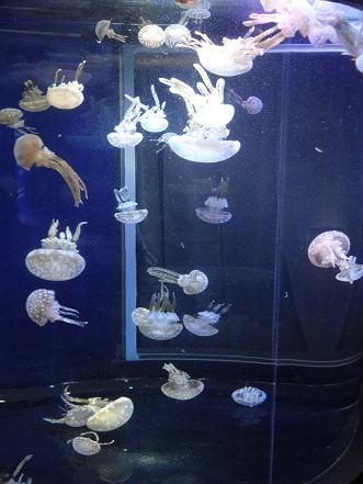 新江ノ島水族館 クラゲ