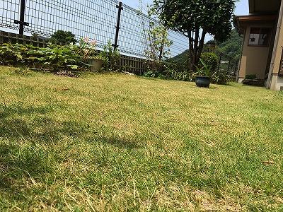 s-芝刈り後