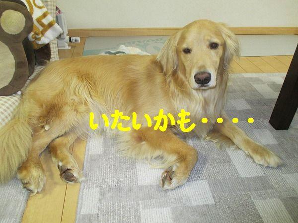 2014-2-27-ハチ-002