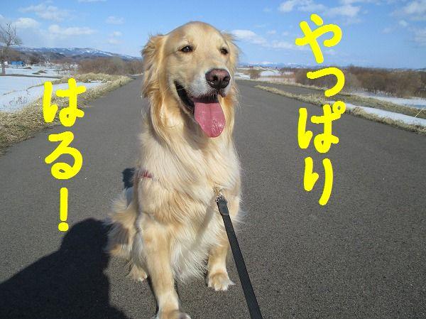 2014-3-22-ハチ-005