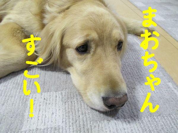 2014-3-27-ハチ-004