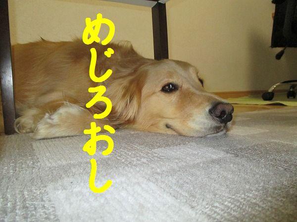 2014-3-27-ハチ-011
