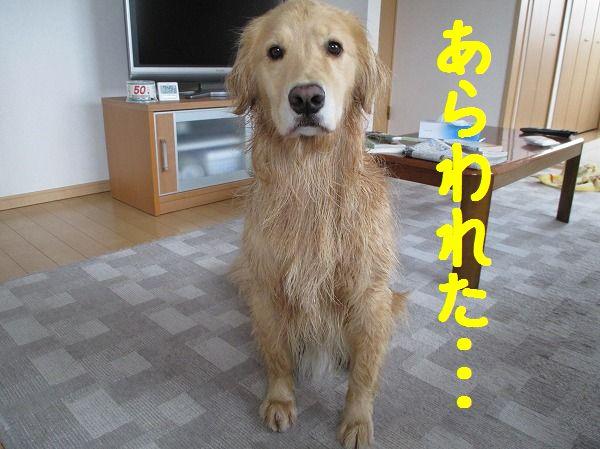 2014-3-30-ハチ-001