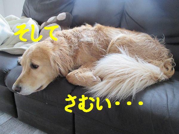 2014-3-30-ハチ-003