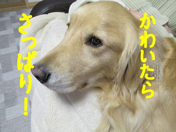 2014-3-30-ハチ-011