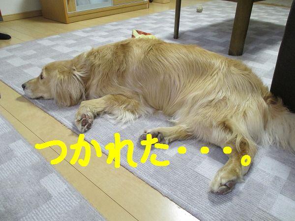 2014-3-31-ハチ-006