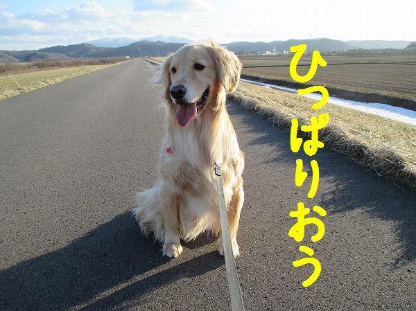 2014-4-5-ハチ-014
