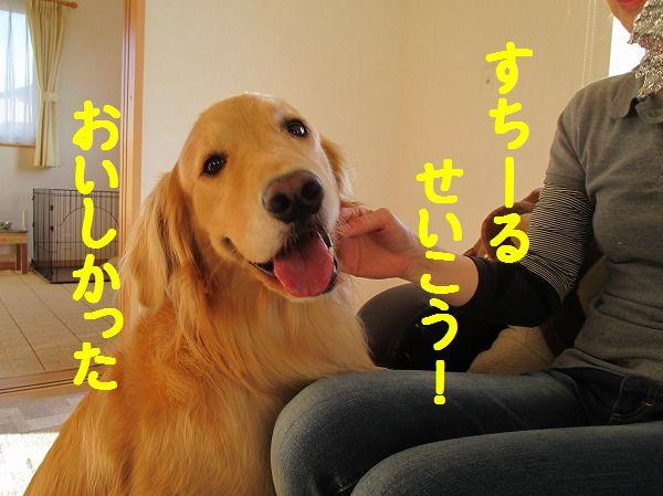 2014-4-19-ハチ-006