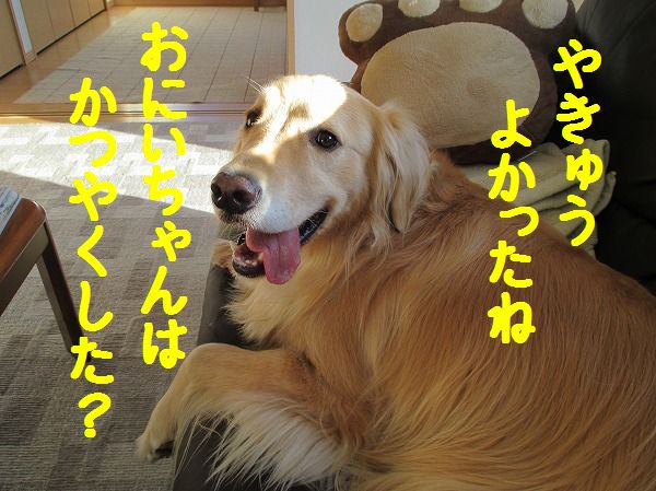 2014-4-19-ハチ-010