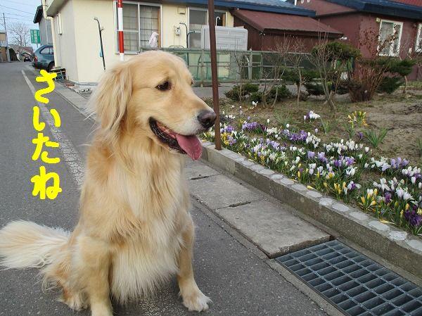2014-4-20-ハチ-010