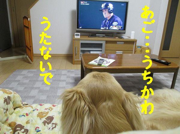 2014-4-23-ハチ-005