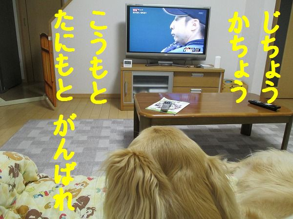 2014-4-23-ハチ-006