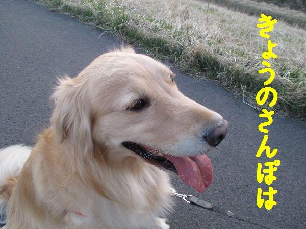 2014-4-24-ハチ-006