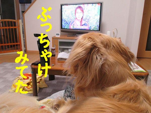 2014-4-26-ハチ-010