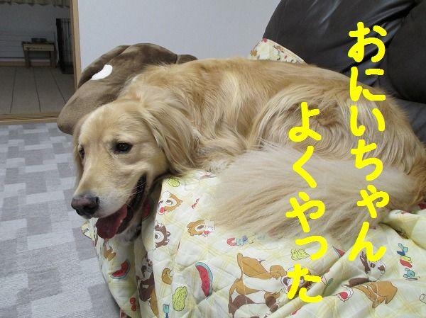 2014-4-26-ハチ-011