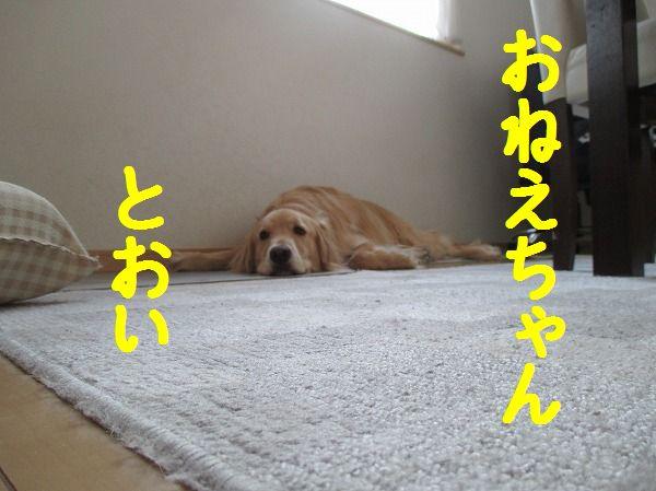 2014-4-27-ハチ-013