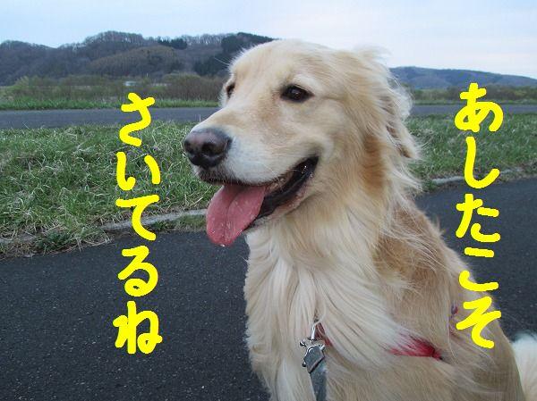 2014-4-30-ハチ-014