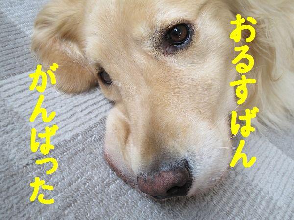 2014-5-5-ハチ-009